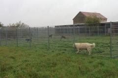 Tierheim und Hundegehege
